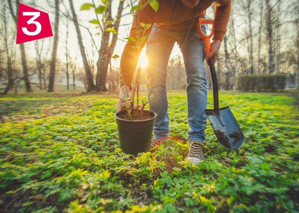 foret planter arbre